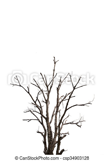 Single old and dead tree isolated on white background - csp34903128