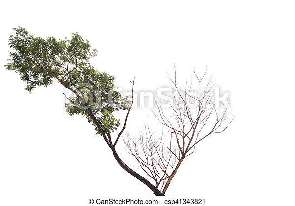 Single old and dead tree - csp41343821