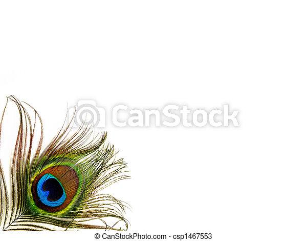 Single Peacock Feather  - csp1467553