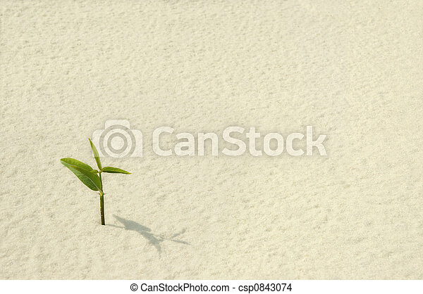 Single Plant Sprouting - csp0843074