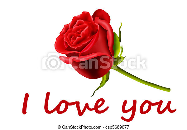 Single Red Rose I Love You Isolated On A White Background
