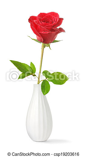 Single Rose In A Vase Single Red Rose In A Vase Isolated On White