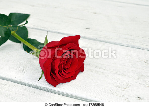 single rose on table - csp17358546