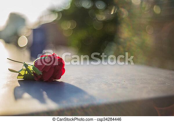 Single Rose - csp34284446