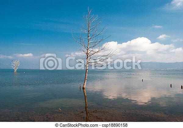 Single tree growing in bog lake at misty morning - csp18890158