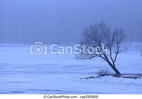 Single tree in winter - csp3305900