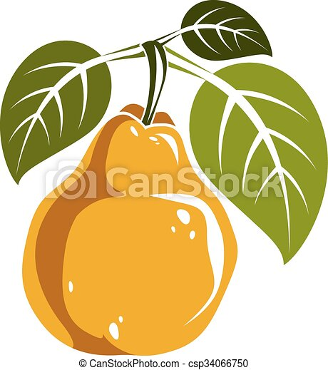 Single Yellow Simple Vector Pear With Green Leaves Ripe Sweet Fruit