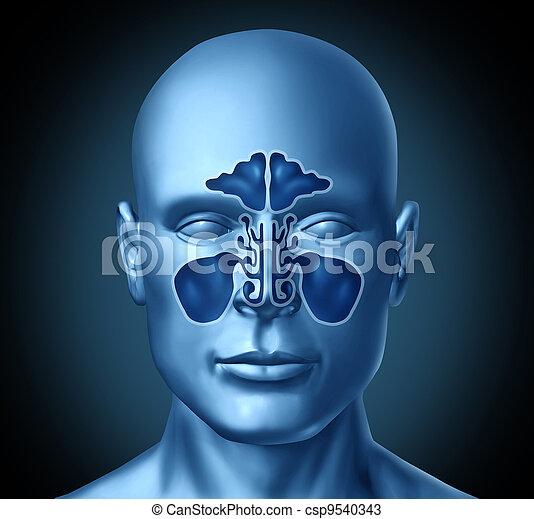 Sinus cavity on a human head - csp9540343