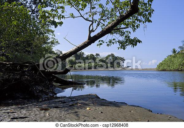 Sirena River Banks at Corcovado National Park - csp12968408