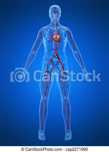 sistema, cardiovascolare - csp2271990