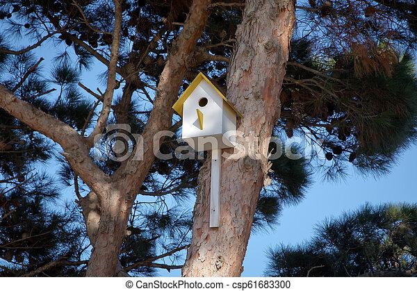 La casa del pájaro colgando del árbol con el agujero de entrada en forma de círculo. Azerbaiyán baku. Una casa de pájaros amarilla en un árbol en una zona de la pradera, un refugio para pájaros para pasar el invierno - csp61683300