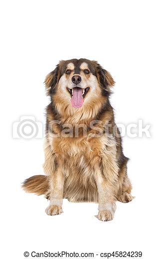 Sitting dog on a white background - csp45824239