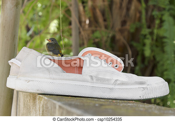 Sitting on a shoe - csp10254335