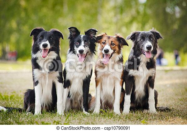 sittingon, herbe, groupe, chiens, heureux - csp10790091