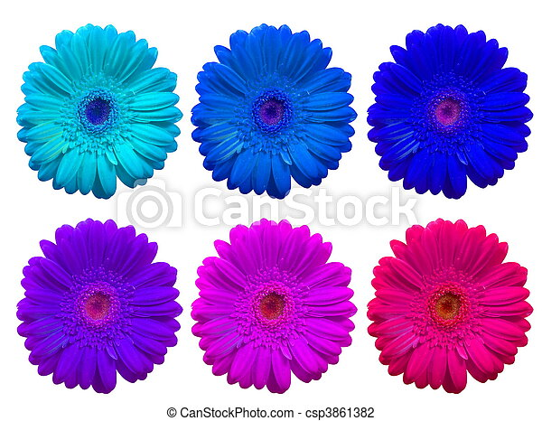 six daisy gerbera flowers collage of daisy gerbera flowers over