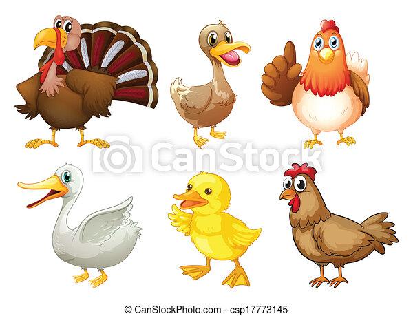 Six different birds - csp17773145