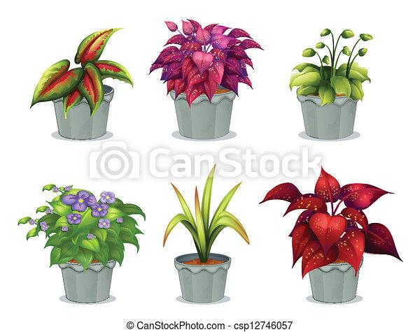 Six different plants illustration of six different plants for Plantas decorativas tipos