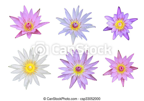 Six mix of pink and white lotus flower top view has some drop water six mix of pink and white lotus flower top view has some drop water on the petal isolated on white background symbol of purity and buddhism mightylinksfo