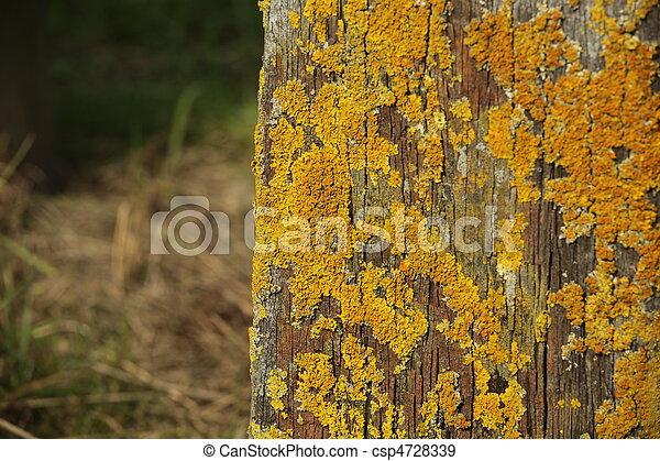 gul mossa på träd