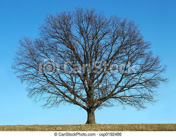 skallig, träd - csp0192486