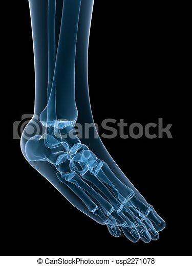 3d Rendered Illustration Of A Human Skeletal Foot Stock Illustration