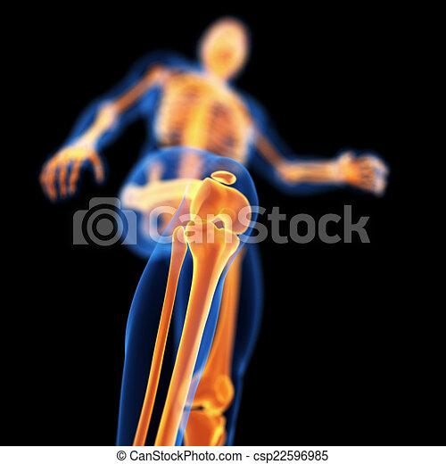 skeletal knee - csp22596985