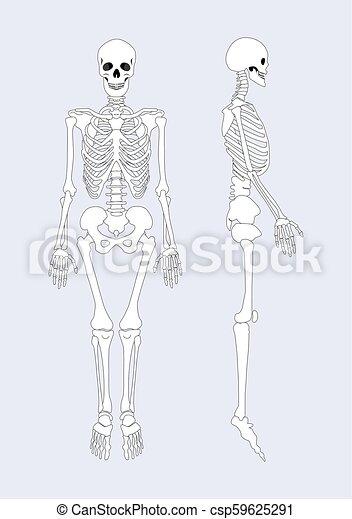 skeleton construction system