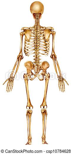Skeleton back view back view body skeleton skeleton back view csp10784628 ccuart Gallery