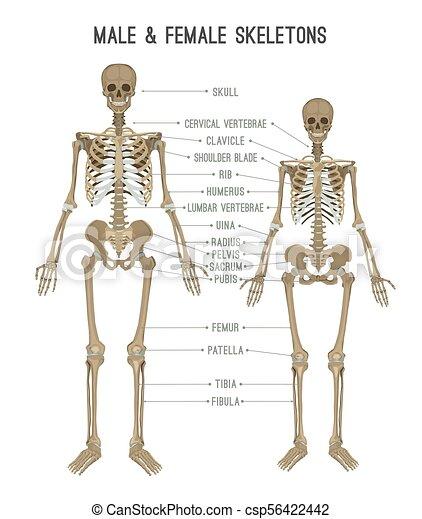 skeleton differences image skeleton differences poster