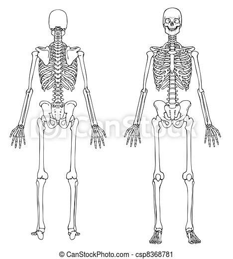 Skeleton Stock Photo Images 92079 Skeleton Royalty Free Pictures