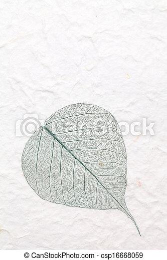 skeleton leaf - csp16668059
