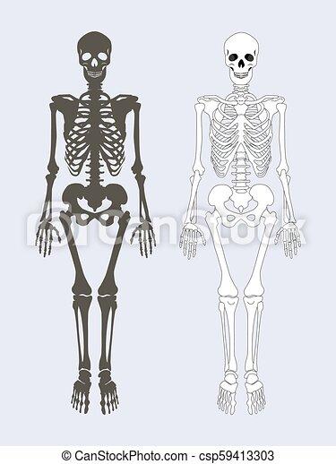 Skeleton of human body set vector illustration. Skeleton of human ...
