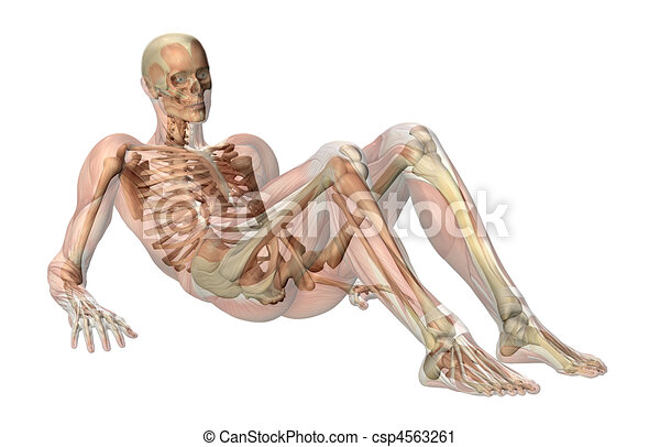 Skeleton with Semi-transparent Muscles -Seated on floor - csp4563261