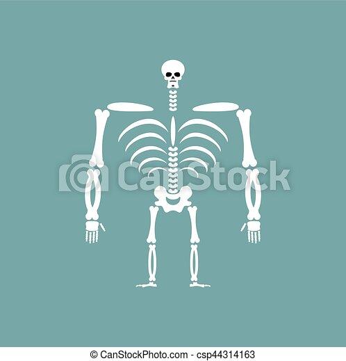 Skelett, totenschädel, isolated., rippen, rückgrat, menschliche , bones.