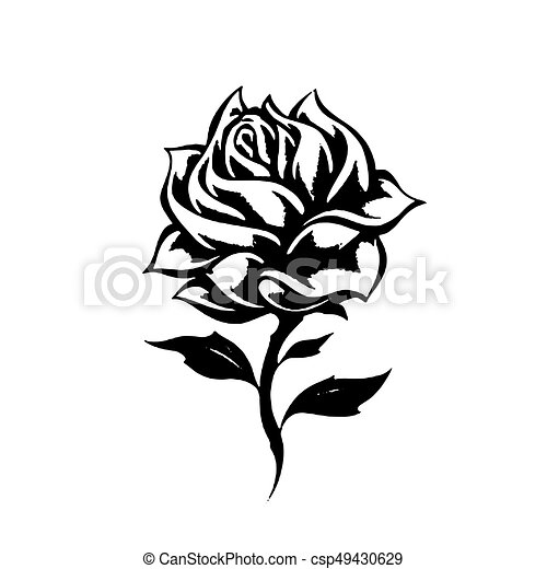 Sketch Flower Rose A Beautiful Rose Plant A Blossoming Rosebud