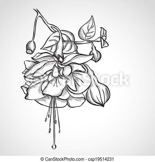 Sketch Fuchsia flowers - csp19514231