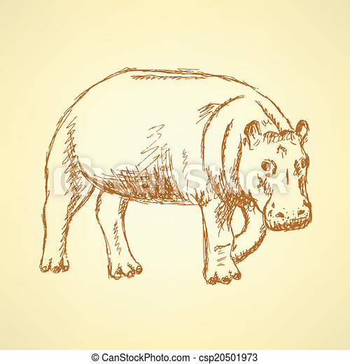 Sketch hippo, vector vintage background - csp20501973
