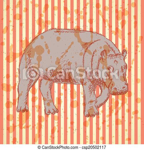 Sketch hippo, vector vintage background - csp20502117