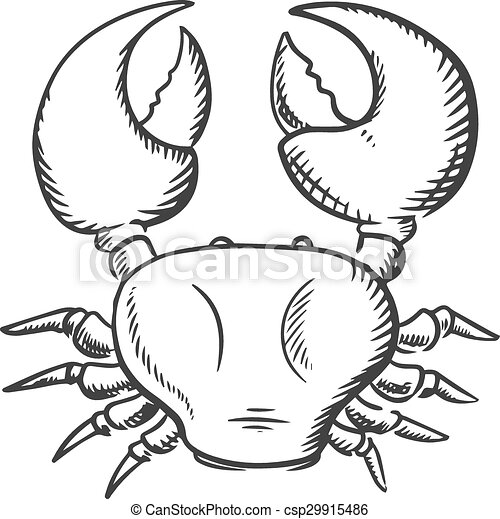 Sketch Of Big Ocean Crab Ocean Crab Top View With Big Claws