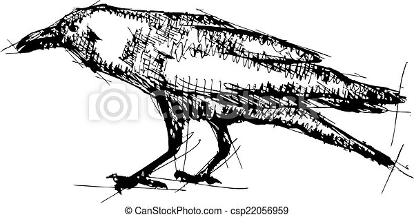 Sketch vector illustration of crow - csp22056959