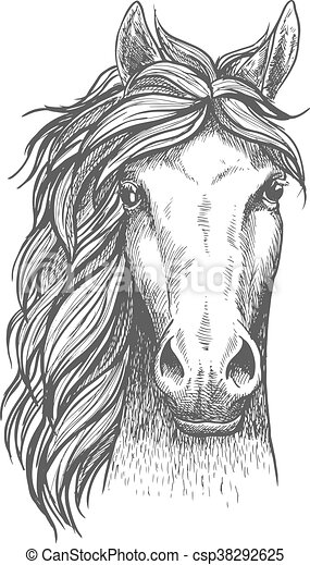 Sketched arabian purebred horse with alert ears - csp38292625