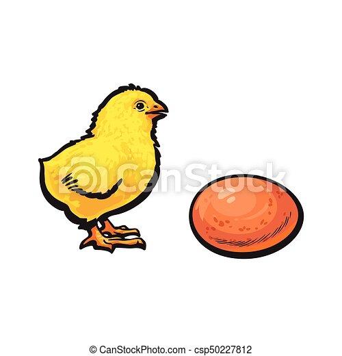 obrázek nahých kuřat