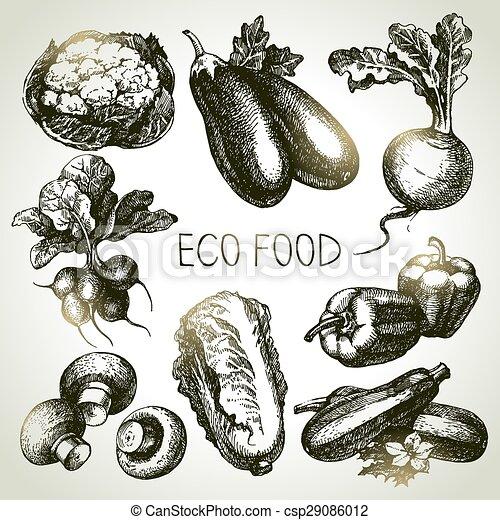 skicc, eco, set., ábra, kéz, foods.vector, növényi, húzott - csp29086012