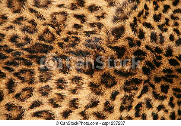Skin of the leopard - csp1237237