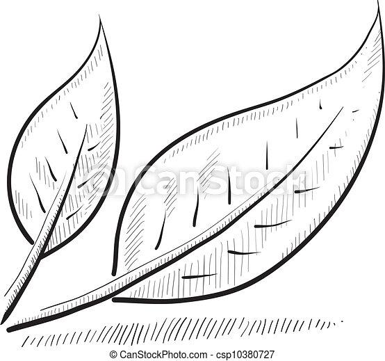 skizze, blatt - csp10380727