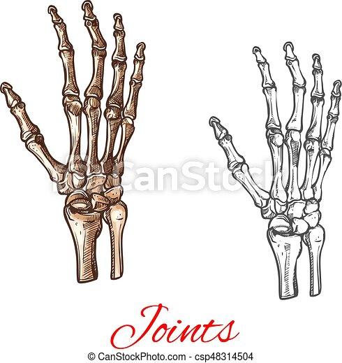 Skizze, gelenke, hand, vektor, menschliche , knochen, oder, ikone ...