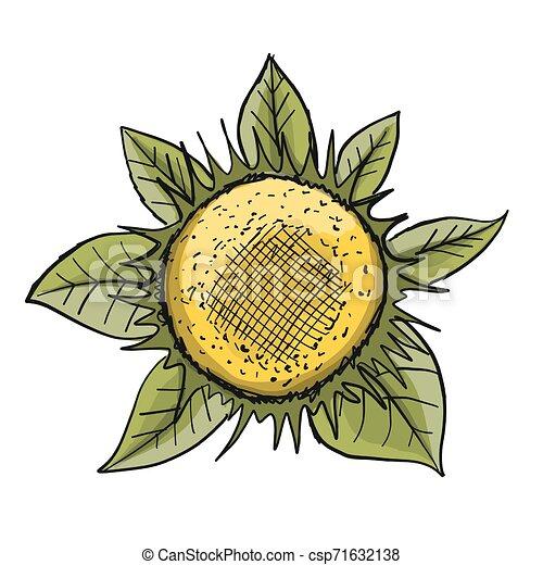 Sonnenblume, Sketch für dein Design - csp71632138