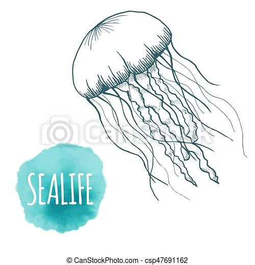 Skizze tiere freigestellt hand qualle gezeichnet - Clip art animali marini ...