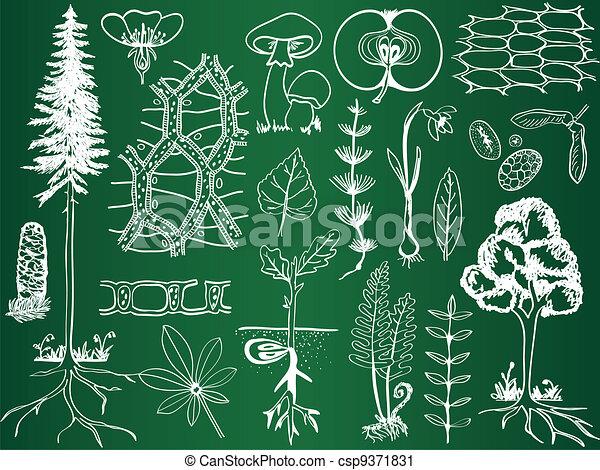 skizzen, botanik, biologie, schule, -, pflanze, abbildung, brett - csp9371831