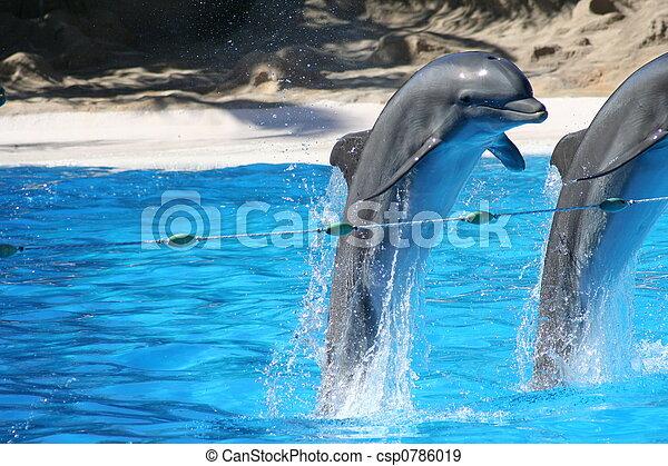 skokowy, delfiny - csp0786019